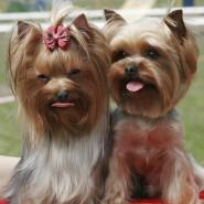Выставка «Мир собак» фотографии