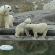 День белого медведя в Ленинградском зоопарке 2018 фотографии