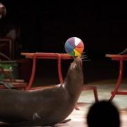 Цирковое шоу морских животных «Морской круиз» фотографии