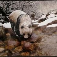 Фотовыставка «Дикая природа России» 2019 фотографии