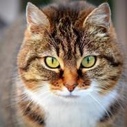 Выставка-раздача животных кошачьего приюта «Брошенный ангел» фотографии