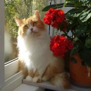 Выставка «Кошка на окошке» фотографии