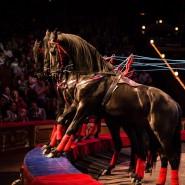 Цирковая программа «Конно-цирковой форсаж» фотографии