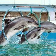 Шоу «Дельфины Северной Столицы» фотографии