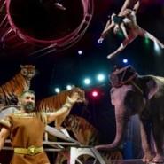 Итальянский цирк Togni фотографии