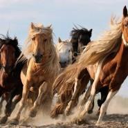Международная конная выставка «Иппосфера» 2018 фотографии
