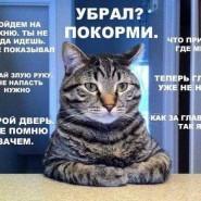 Выставка кошек   «В гостях у САФФИ» 2016 фотографии