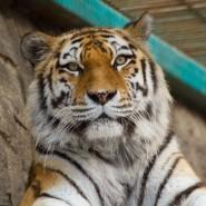 Открытие Ленинградского зоопарка лето 2020 фотографии