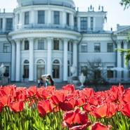 «Фестиваль тюльпанов» на Елагином острове 2018 фотографии