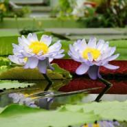 Открытие Ботанического сада в Санкт-Петербурге лето 2020 фотографии
