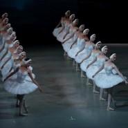 Балет «Лебединое озеро» в Мариинском театре фотографии