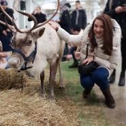 Зимний фестиваль  «Северные олени» фотографии