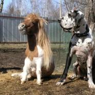 Фестиваль «Мини кони» фотографии