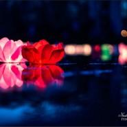 Фестиваль водных фонариков в Юсуповском саду 2020 фотографии
