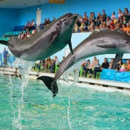 Шоу «Дельфины Северной Столицы» 2020 фотографии
