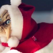 Спектакль «Новый год и кошки. В.Куклачев» фотографии