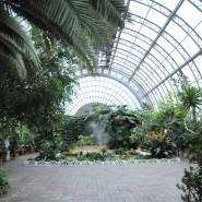 Оранжерея Таврического сада фотографии