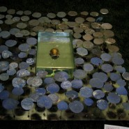 Выставка «Свет отражённый» фотографии