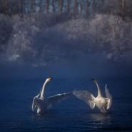 Выставка «Дикая природа России 2015» фотографии