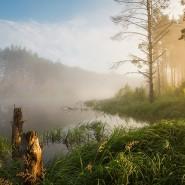Фотовыставка «Дикая природа России» фотографии