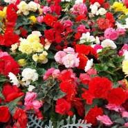 Фестиваль цветов в Ботаническом саду 2017 фотографии
