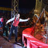 Шоу «Морские львы» фотографии