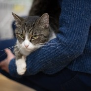 Благотворительная выставка «Високосный кот» фотографии