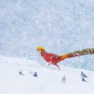 Выставка «Живая природа Китая» фотографии