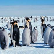 Выставка «Антарктида: два века исследования» фотографии