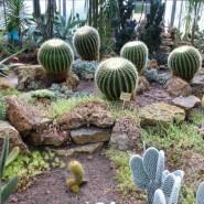 Выставка «Сокровища южно-африканских пустынь» фотографии