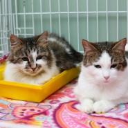 Выставка-пристройство кошек «Кот Морган рекомендует себя» фотографии