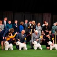 Выставка «Город собак» 2020 фотографии