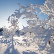 Топ-10 интересных событий в Санкт-Петербурге на выходные 19 и 20 января фотографии