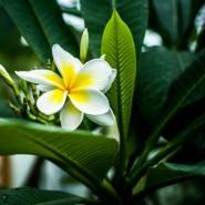 День защитника Отечества в Ботаническом саду 2017 фотографии