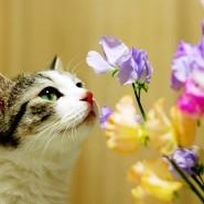 Праздник «День кошек» фотографии