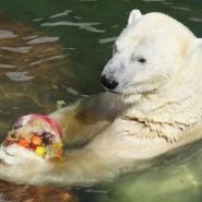 Программа для детей в Ленинградском зоопарке фотографии