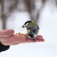 Фотоконкурс «Птичий бум» фотографии