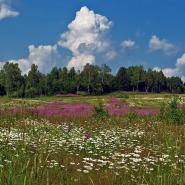Фестиваль заповедной природы «Оберег Невы» 2018 фотографии