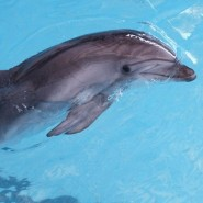 Шоу с морскими животными фотографии
