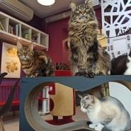 Петербургское котокафе «Республика котов» онлайн фотографии