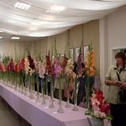 Выставка «Гладиолусы и георгины» и фестиваль «Краски лета» 2019 фотографии