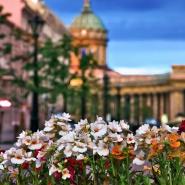 Куда сходить на Майские праздники в Санкт-Петербурге 2018 фотографии