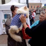 День тельняшки в Санкт-Петербурге 2018 фотографии