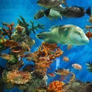 Осень в Океанариуме 2020 фотографии