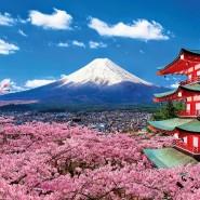 Выставка «Очарование вещей: искусства и ремёсла Японии» фотографии