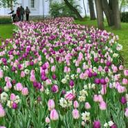 Фестиваль тюльпанов на Елагином острове 2017 фотографии