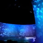 Фестиваль науки, технологий и искусства «Science Fest» фотографии