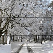 Видео—работа «Уолдгейтский лес, зима, 2010» фотографии