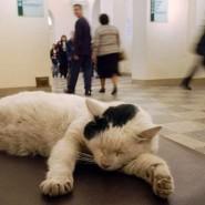 «День эрмитажного кота» 2017 фотографии