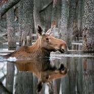 Фотовыставка «Дикая природа России» 2020 фотографии
